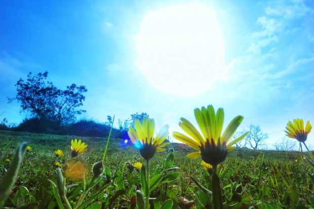 Sun over flower filled field