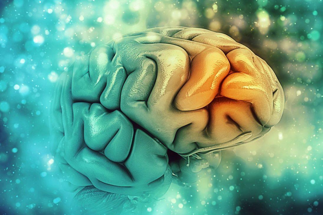 3D image of brain